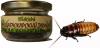 таракан мадагаскарский